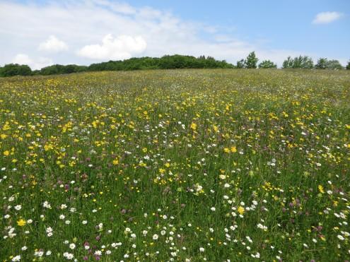 Blumenwiesen15,2-breuningerklein