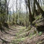 Hohlweg bei Braunsbach